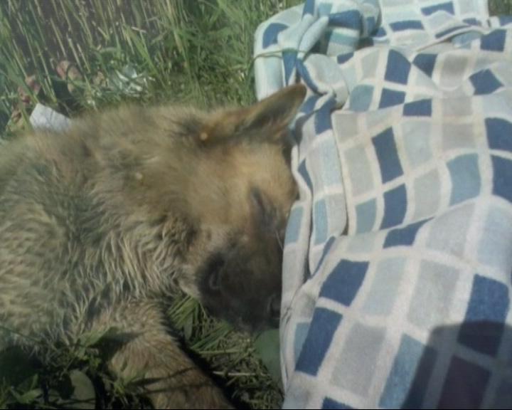 Пропал всеми любимый бездомный пес Кузя