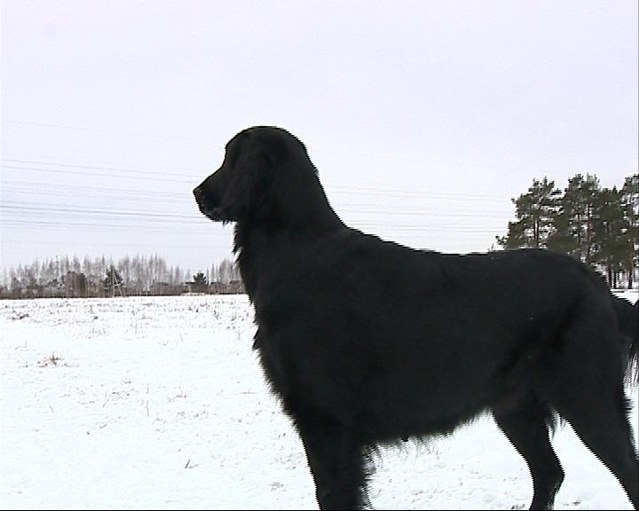 Искать пропавших в лесу людей волонтеры теперь будут с собаками