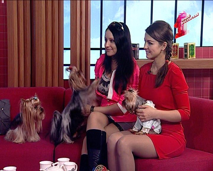 Собаки ткачей теперь считаются атрибутом девушки из высшего общества