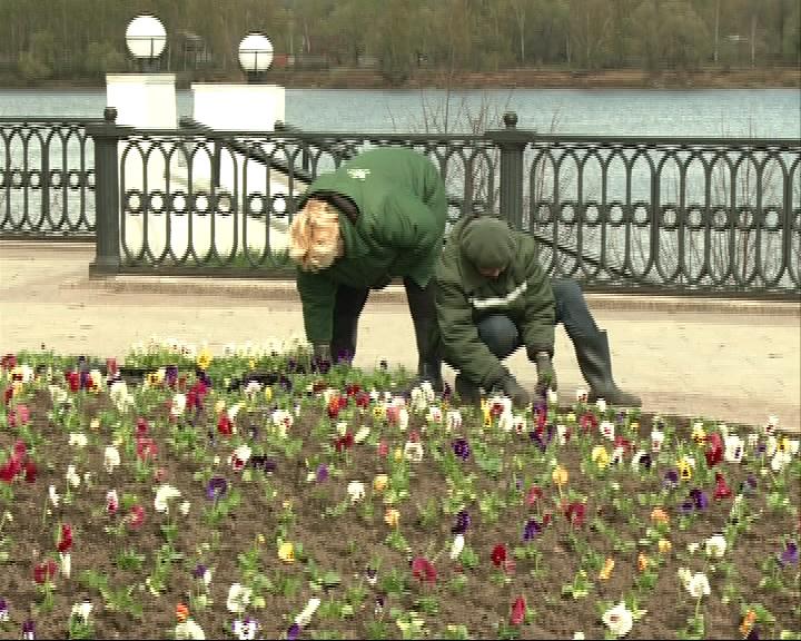 800 тысяч разнообразных цветов украсят Стрелку