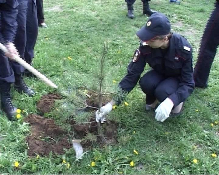 Сотрудники вневедомственной охраны озеленили детские площадки