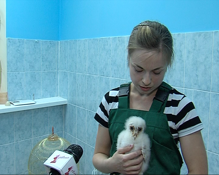 В Ярославском зоопарке пополнение: в семействе сов появился птенец