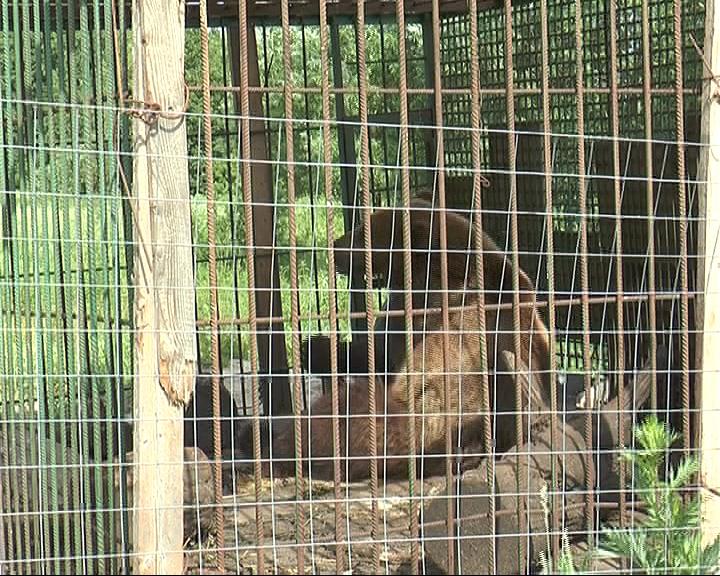 В Переславле начался сбор подписей в защиту голодающих зверей