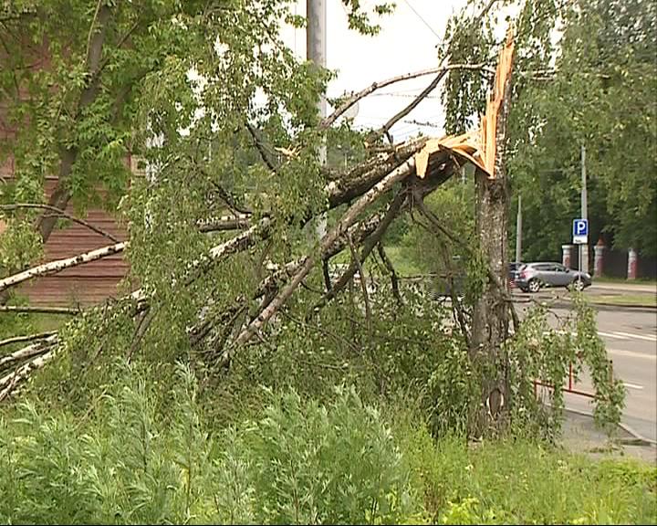 Разбушевавшаяся стихия сломала несколько деревьев