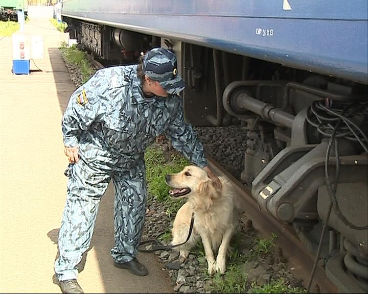 Четыре обученные собаки искали наркотики и взрывчатку