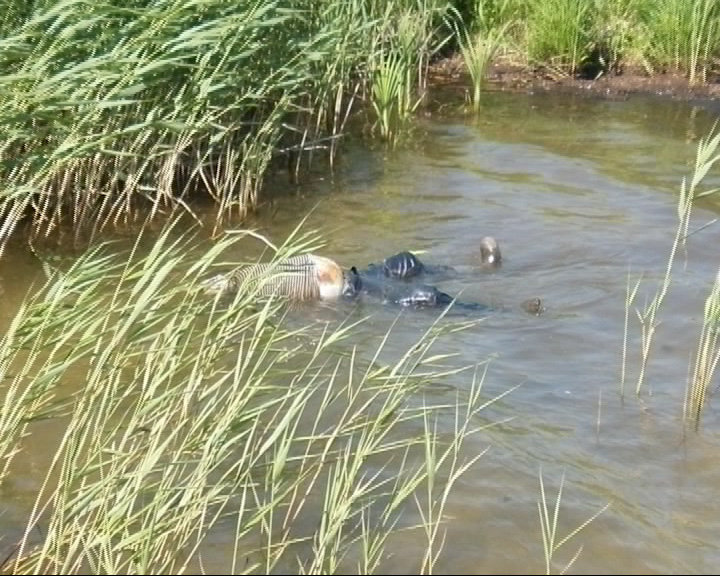 В акватории Плещеева озера обнаружено тело мужчины