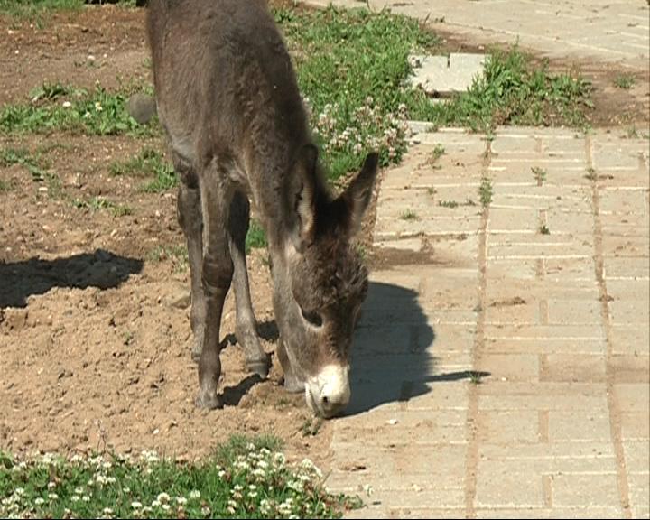 В Ярославском зоопарке на свет появился осленок