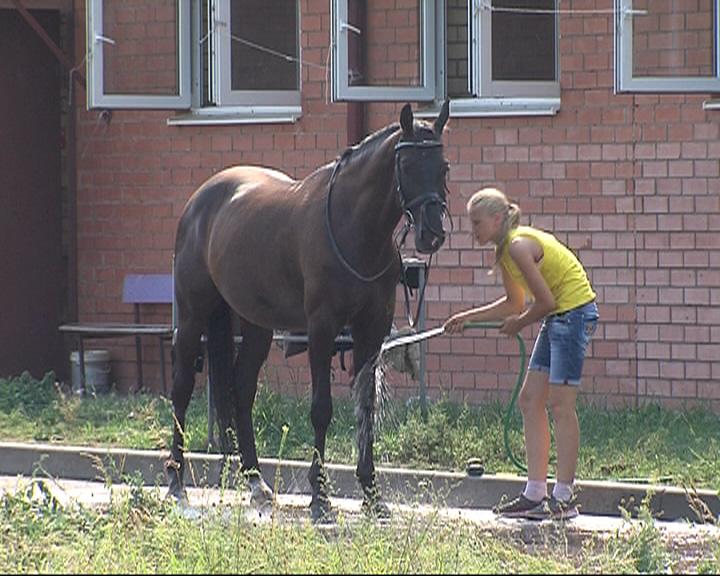 Как будет развиваться ярославская конно-спортивная школа?