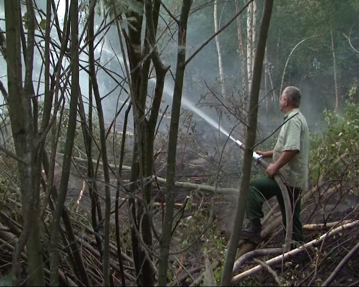 В регион пришли лесные пожары