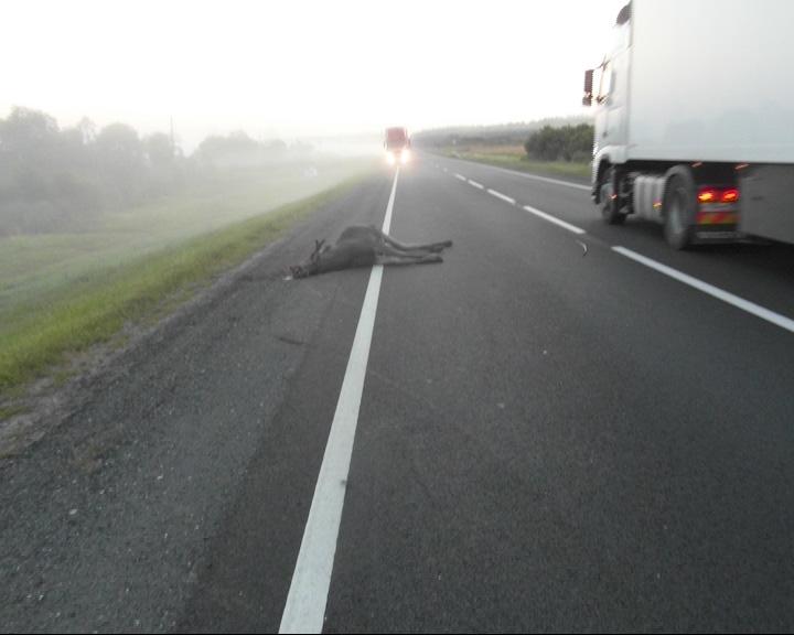 После столкновения с лосем погиб водитель