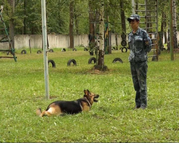 Состоялись областные лично-командные соревнования по многоборью со служебными собаками