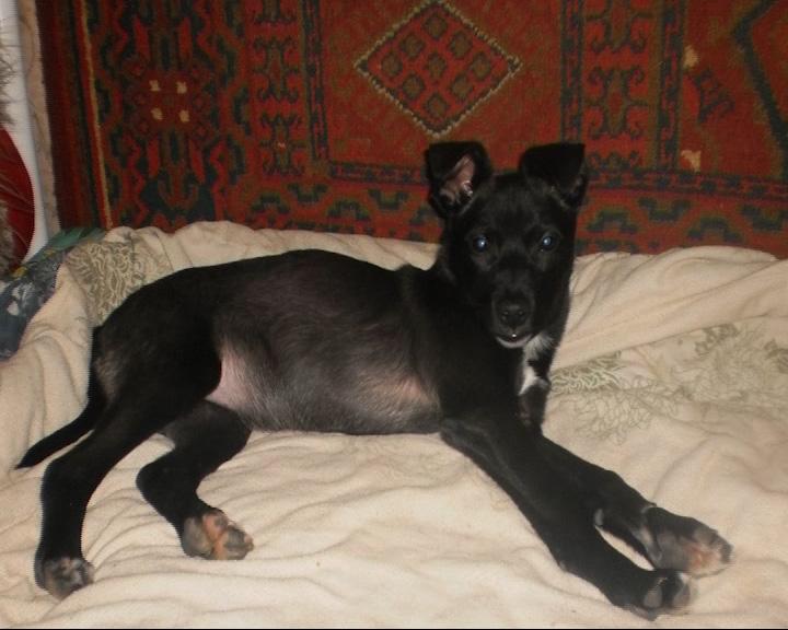Собака и около десятка щенков могут быть погребены заживо
