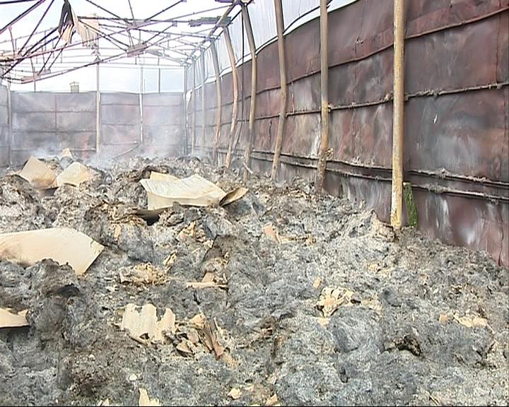 Пожар на агрокомплексе: 330 коров остались без сена