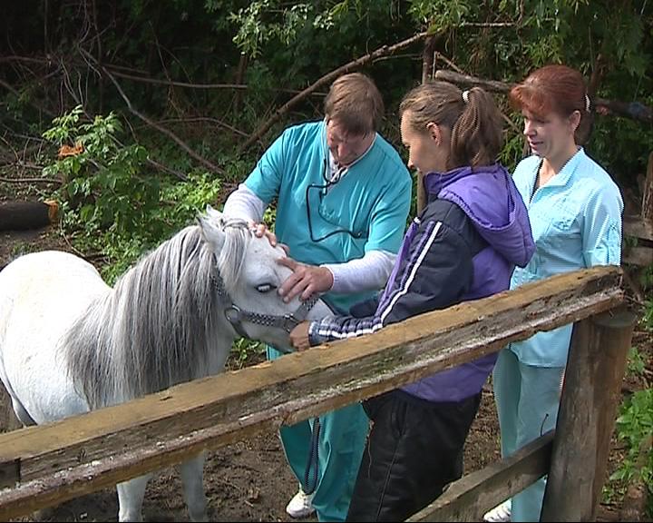 День ветеринара впервые отмечают официально и на государственном уровне