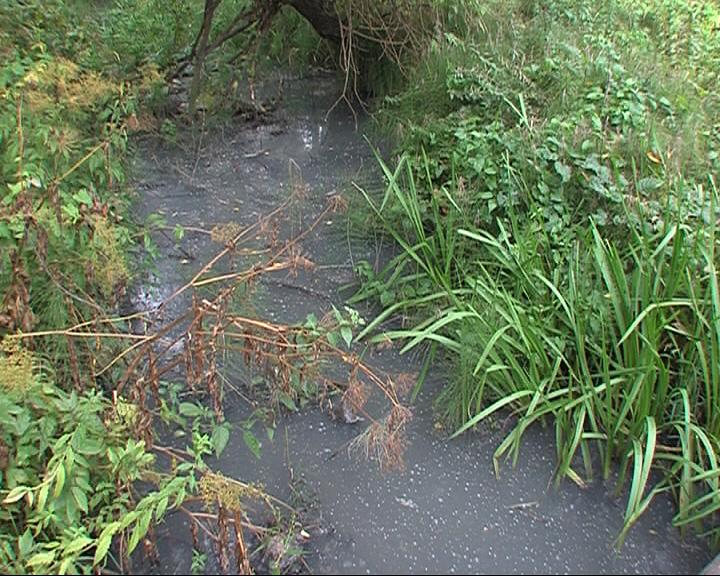 Вместо ручья в Кармановском - болото и зловонный запах