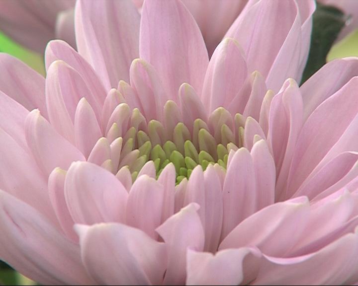 В одном из ТЦ Ярославля обнаружены зараженные цветы