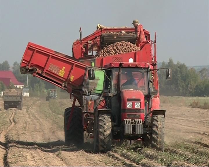 На ярославских полях идет активный сбор урожая