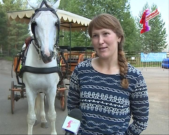 Миф: спят ли лошади стоя?