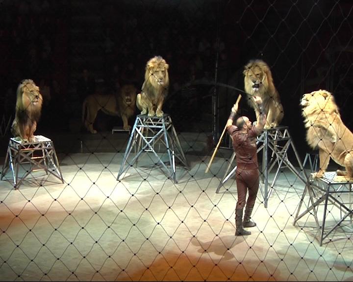 Новая программа, которая стартует в цирке 20 сентября, готовит ярославскому зрителю немало сюрпризов