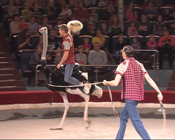 В ярославский цирк приехала новая программа «В мире цирковых животных»