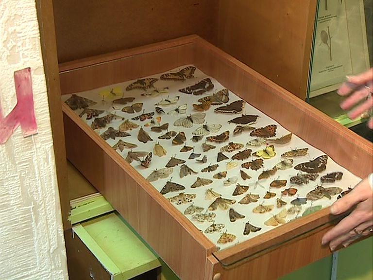 В ярославской школе появилась уникальная коллекция насекомых
