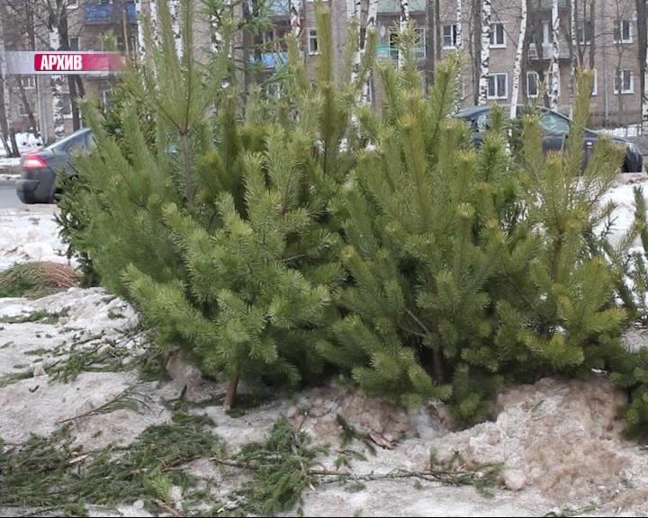 Любителям самовольно рубить новогодние елки ужесточили наказание