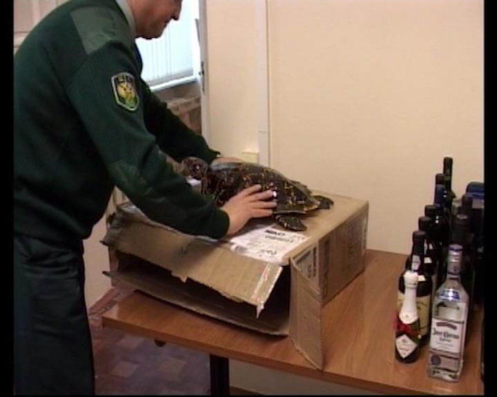 Незадекларированный груз, обнаруженный у пилотов в Туношне, отправят на утилизацию и криминалистическую экспертизу