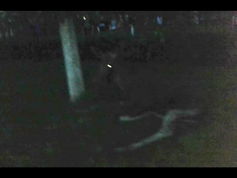 На улице Гагарина лось выбежал на дорогу и попал под грузовик