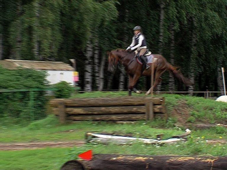 В Ярославле прошло первенство области по конному троеборью