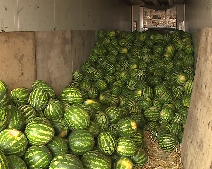 Роспотребнадзор запретил продавать арбузы и дыни по частям