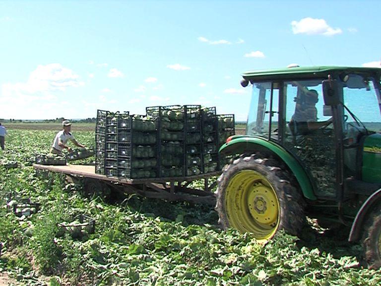 В Ярославской области начинается сбор урожая