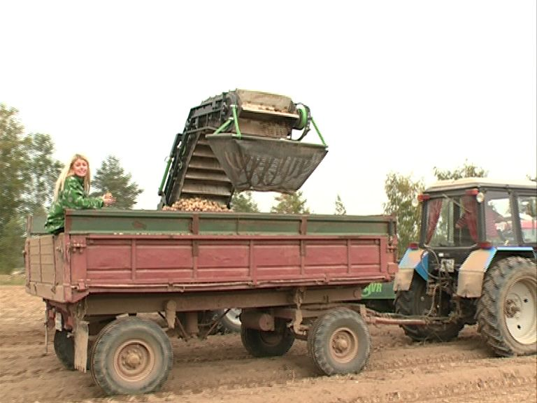 В Ярославской области в самом разгаре сбор урожая
