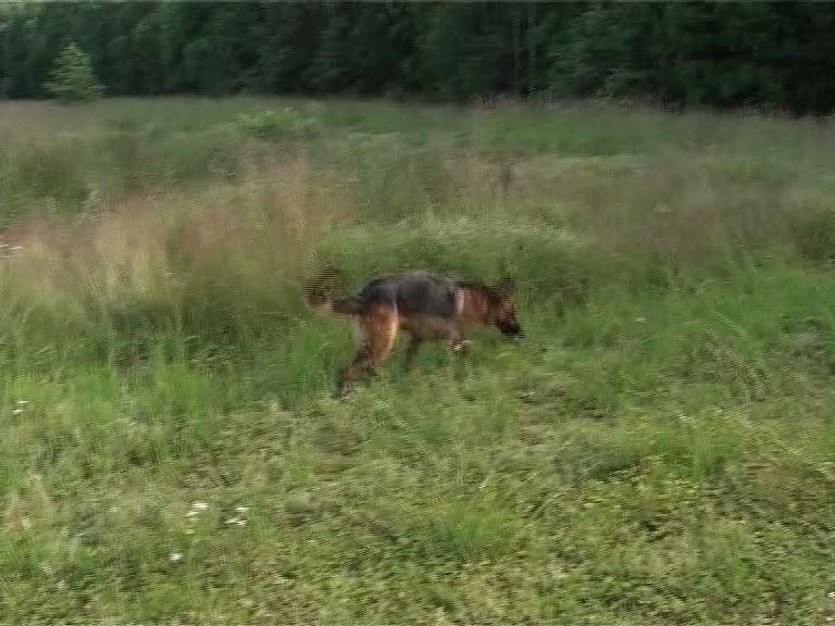 Охотник в Пошехонском районе нашел тело 86-летнего пенсионера