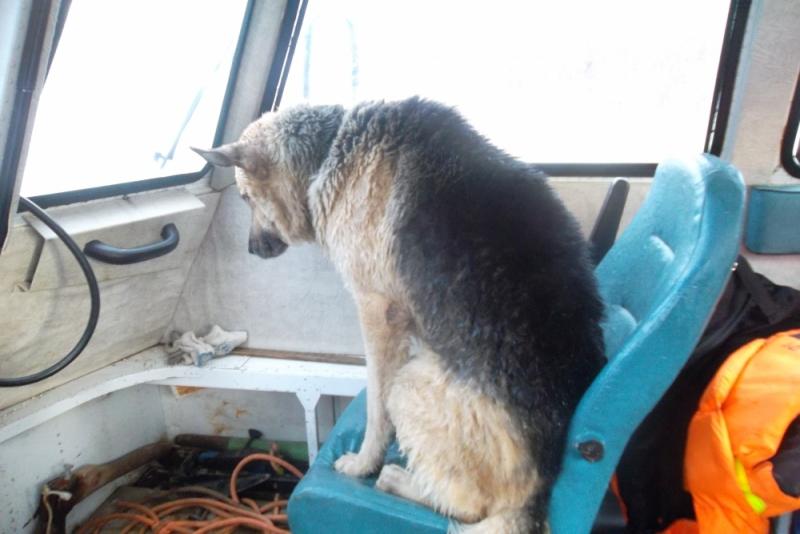 Спасатели из Которосли вытащили овчарку