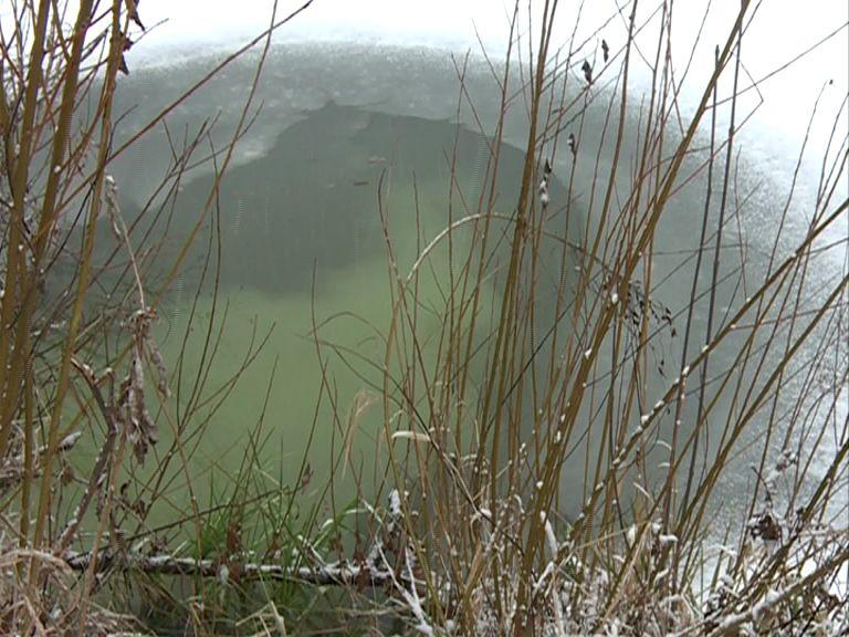 По факту загрязнения реки Устье в поселке Семибратово могут возбудить уголовное дело
