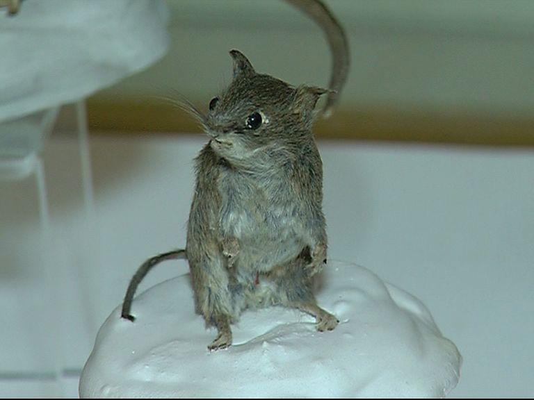 Как воробьи и мыши мигрировали в Ярославль, расскажет мини – выставка