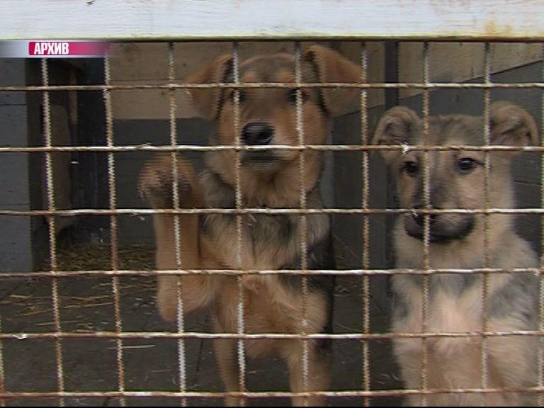 В приюте САХа замерзают щенки