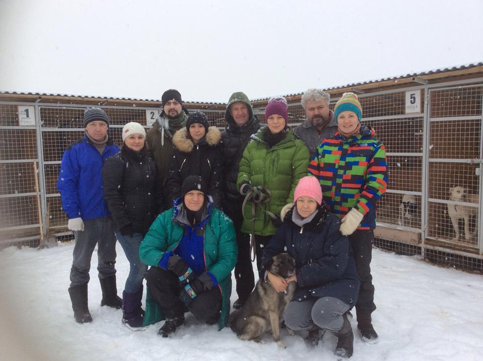 Волонтеры помогли бездомным животным не замерзнуть