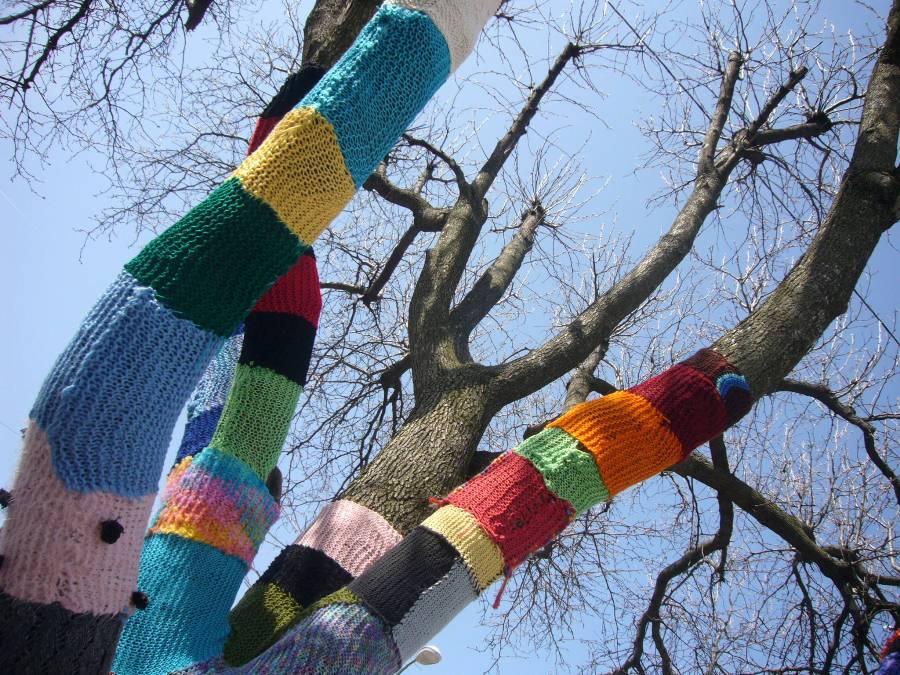 В Рыбинске деревья «оденут» в шарфики и варежки