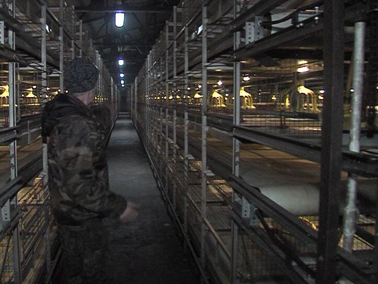 В Брейтовском районе закрылась птицефабрика: областные власти нашли выход из ситуации