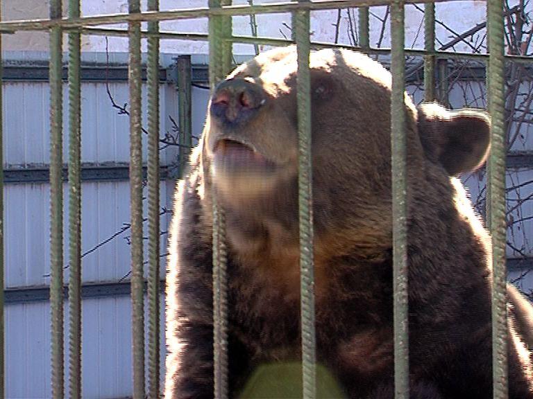 Медведица Маша впала в спячку