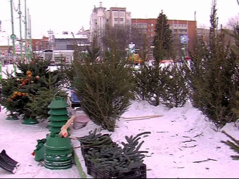 Елочные базары начали работать в Ярославле