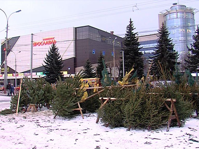 В ярославском зоопарке для животных принимают новогодние елки