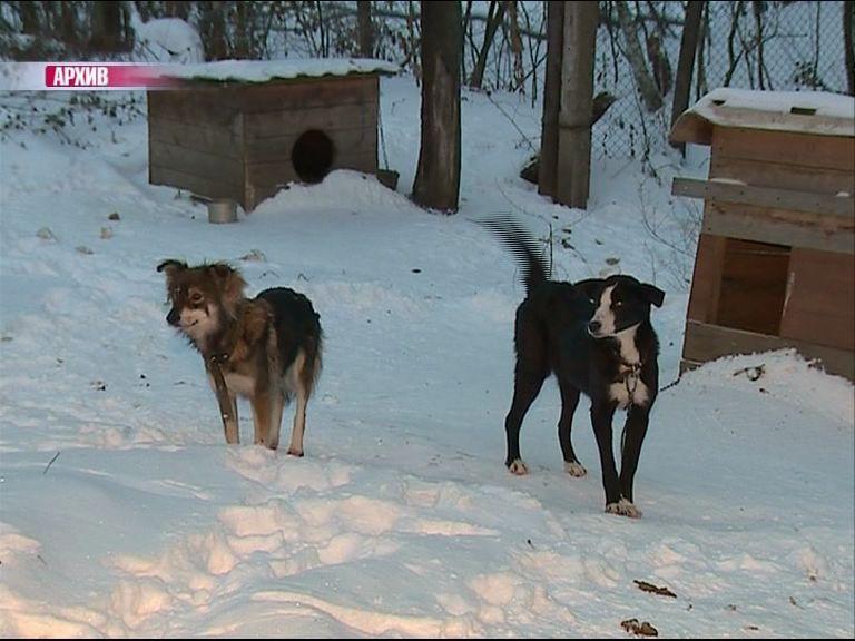 Нужна помощь: Морозы сильно ударили по бездомным животным