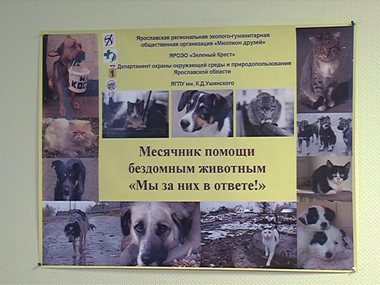 В ярославском зоопарке подвели итоги акции помощи бездомным животным