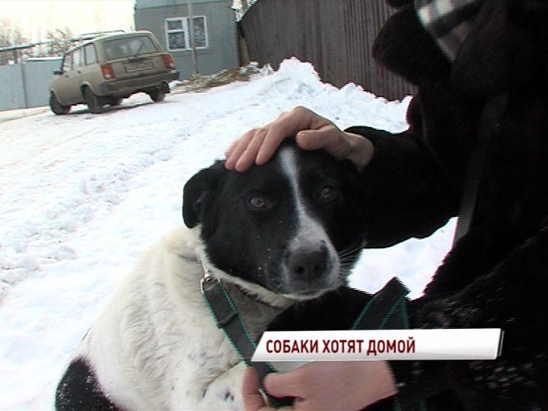 Пункт передержки отловленных собак САХ снова открыл свои двери
