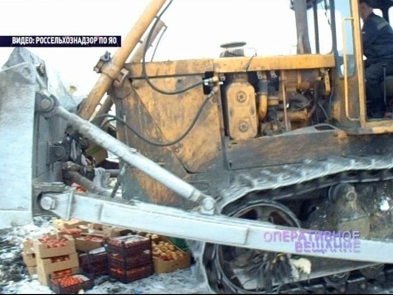 В Ярославле уничтожили более 800 кг. «санкционки»