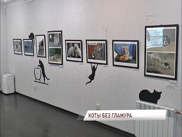 Переславском музее-заповеднике покажут «Котов без гламура»