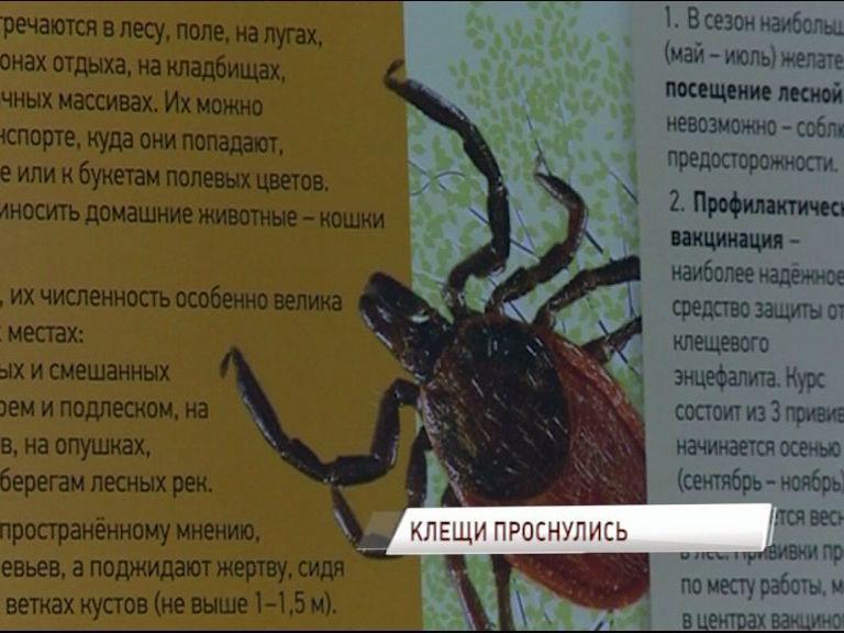 В Ярославле уже проснулись клещи