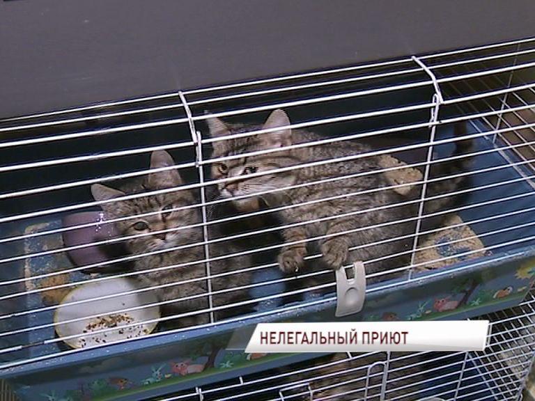 Жильцы ярославской многоэтажки задыхаются от запахов, идущих от незаконного приюта для животных
